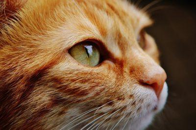 2月22日は猫の日!Adobe Creative Cloudの公式Twitterの猫の日ツイートが面白かった! #ニャドビ